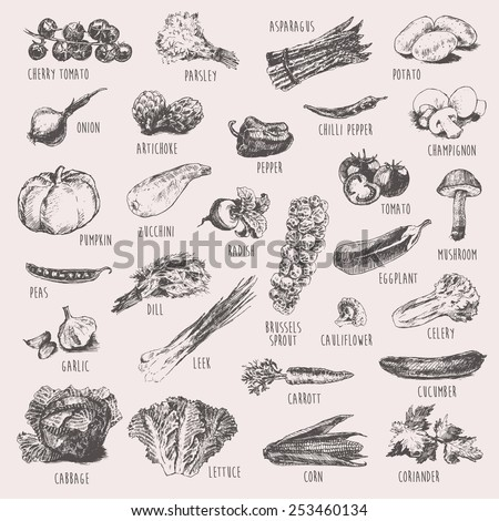 Collection of hand drawn vegetables, high detailed, vector illustration, sketch, engraved style - stock vector