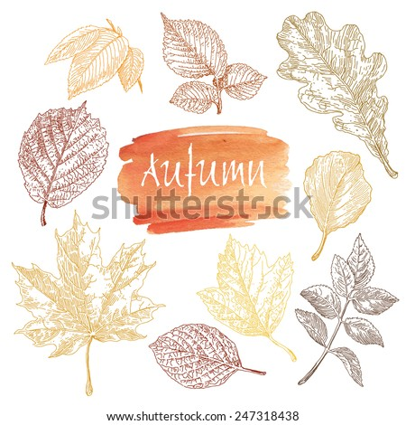 Collection of highly detailed hand drawn leaves isolated on white background. Watercolor blot. Autumn background. - stock vector