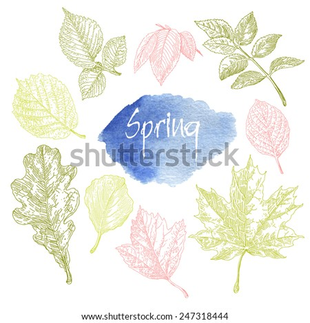 Collection of highly detailed hand drawn leaves isolated on white background. Watercolor blot. Spring background. - stock vector