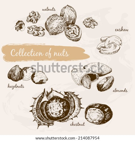 Collection of nuts. Hand drawn graphic illustrations - stock vector