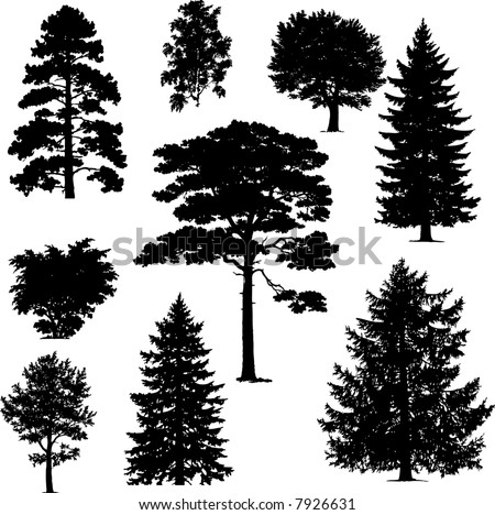 collection of pine trees - stock vector
