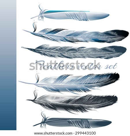 Collection of realistic blue feathers for design - stock vector