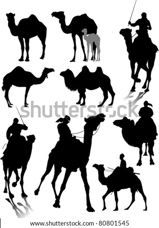 collection of silhouettes of different breeds of camels (vector); - stock vector