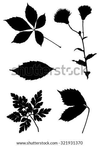 Collection of silhouettes of leaves - stock vector