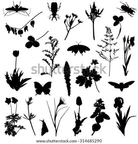 Collection of silhouettes of plants and beetles - stock vector