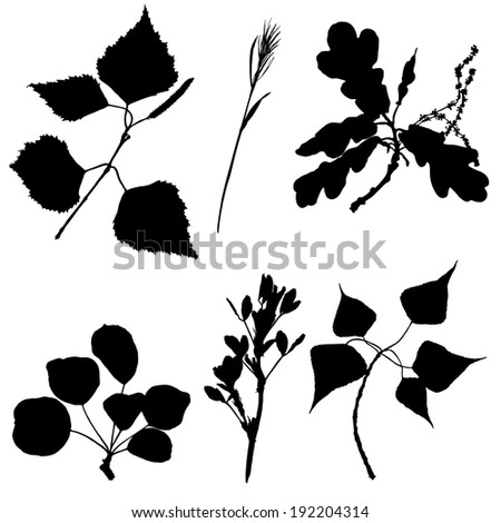 Collection of silhouettes of plants and leaves - stock vector
