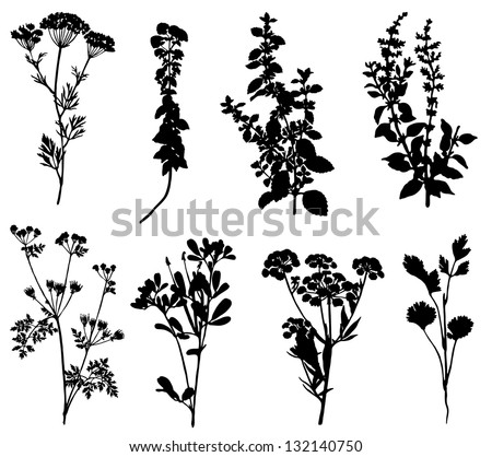 Collection of silhouettes of spicy herbs - stock vector