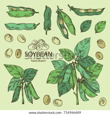 Collection Soybean Plant Soybean Pod Leaves Stock Vector ...