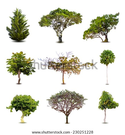 Collection Of Trees isolated On White Background. Vector - stock vector