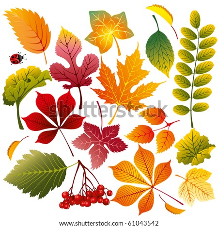 collection of various autumn leaves, wonderful elements to your design - stock vector