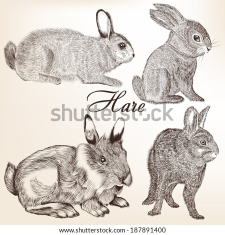 Collection of vector hand drawn rabbits for design - stock vector