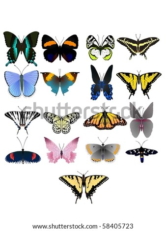Collection of vector images of beautiful butterflies
