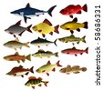 Collection of vector images of fishes - stock vector