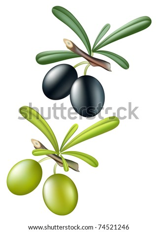 Collection of vector olives. Isolated over white