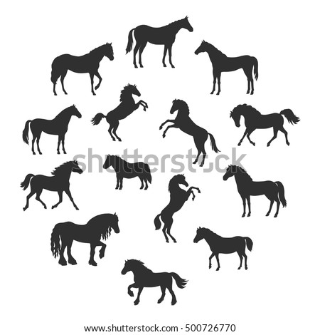 Collection of vector silhouettes of horses breeds in different poses. Standing, runnung, rearing horses. Flat style. For inforgaphics, app icons, equestrian club logo and web design. Isolated on white