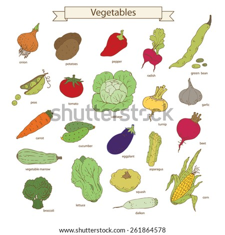 Collection of vegetables. Color vector illustration. - stock vector