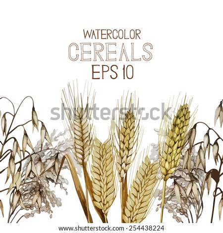 Collection of watercolor cereals in line. Wheat, millet, barley, rye, oats and rice. Vector endless design - stock vector