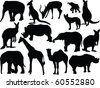 collection of wild animals - vector - stock vector