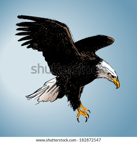 Color drawing of an eagle. Vector illustration
