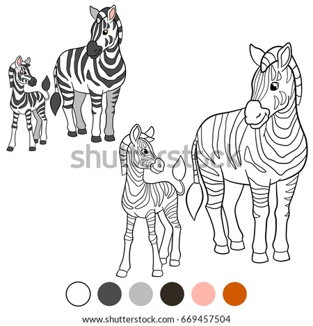 Zebra Stock Images Royalty Free Images Vectors Shutterstock
