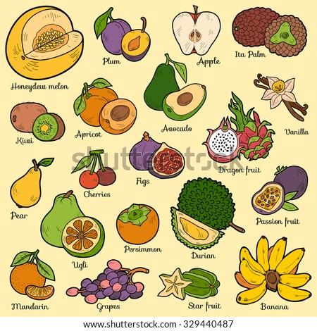 Color set with tropical fruits, vector cartoon collection