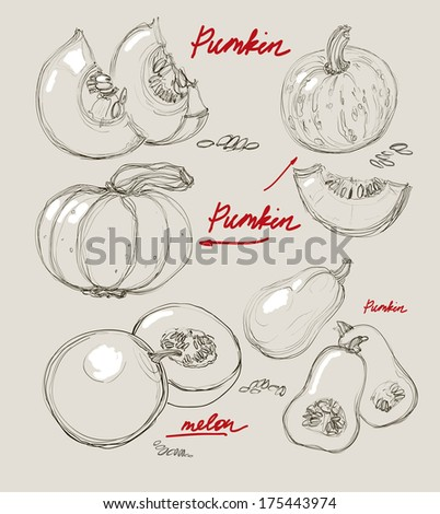 color vector image of pumpkin