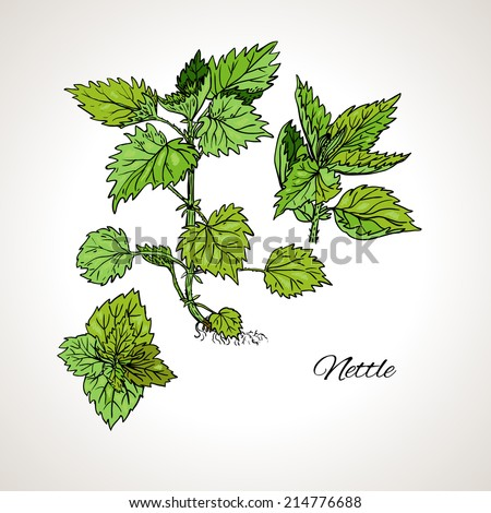 Colored drawing plant nettles