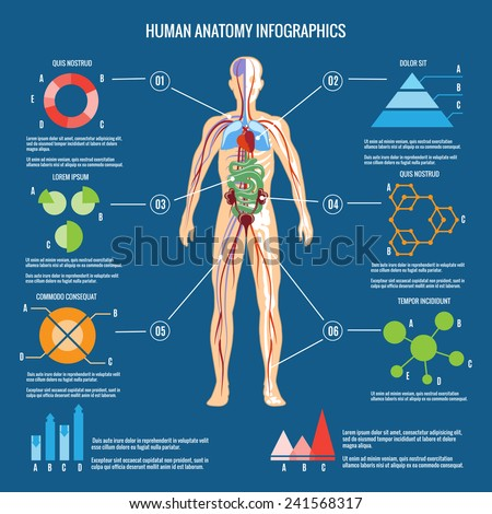 human body anatomy stock images, royalty-free images & vectors, Skeleton