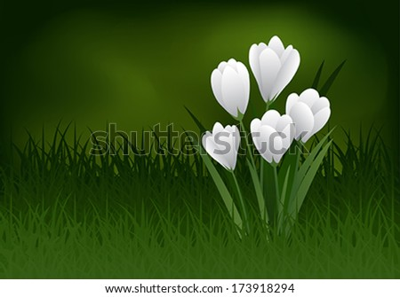 Colored vector image of crocus