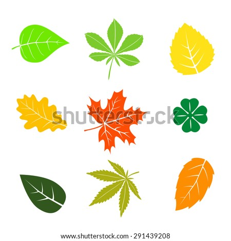 Colorful autumn leaves set on white - stock vector