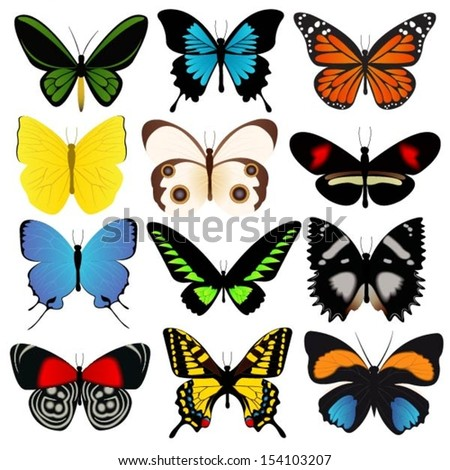 Colorful Butterflies Vector Collection