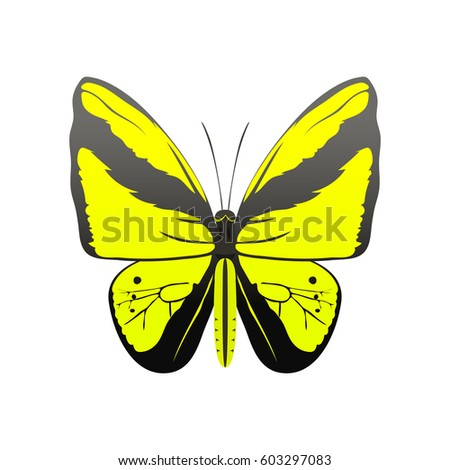 Colorful Butterfly Abstract Decorative Pattern Summer Stock Vector ...