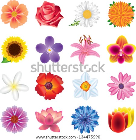 colorful flowers photo-realistic vector set - stock vector