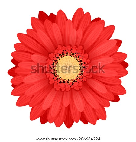 Colorful gerbera flower head - red and yellow colors. - stock vector