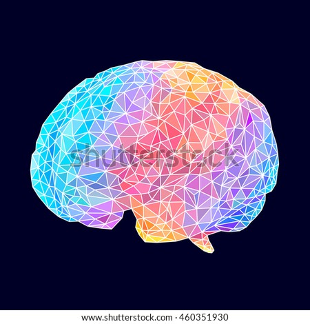 Colorful human brain