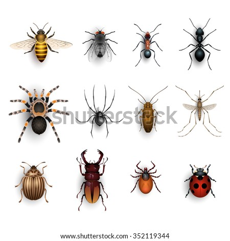 Colorful insects set - stock vector