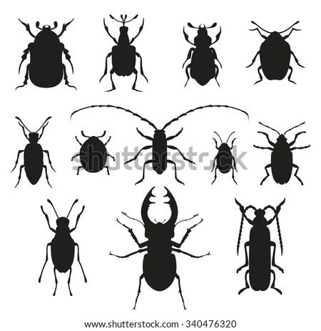 Colorful insects vector black and white collection. Insects biology natural isolated on white background. Insects isolated. Insects vector icons. Fly insects micro view vector. Bugs insects silhouette - stock vector