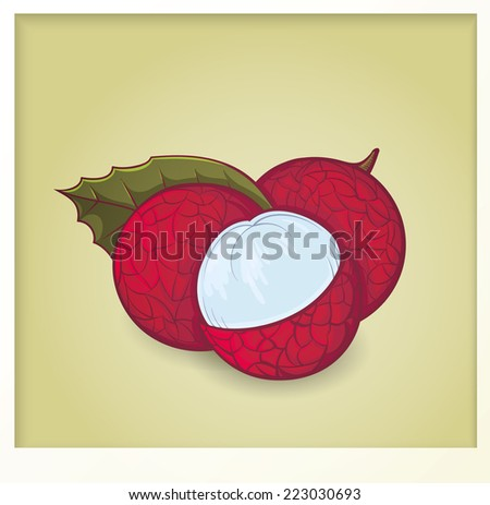 colorful litchi vector illustration