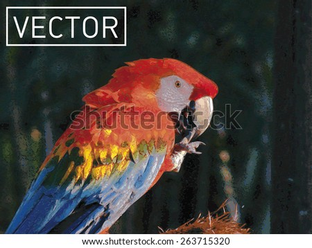 Colorful parrot macaw, arara. Vector Illustration - stock vector