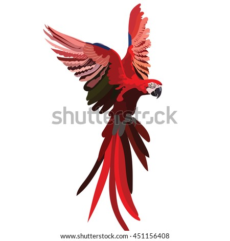 Colorful Red flying parrot Vector isolated  - stock vector