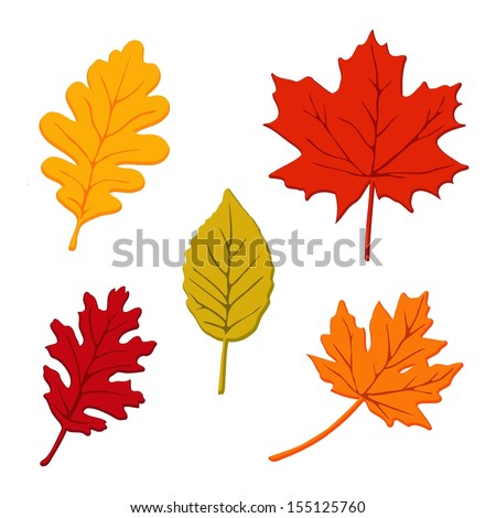 Colorful set of autumn leaves, isolated vector illustration - stock vector