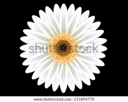 Colorful white gerbera flower on black stock vector 215894770 colorful white gerbera flower on black background mightylinksfo