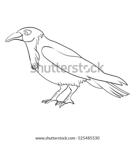 Coloring Book Cute Cartoon Vector Crow Character