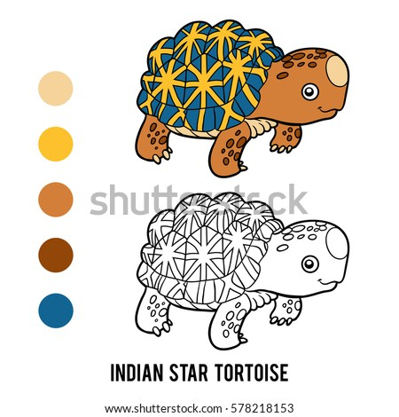 Tortoise Color Stock Images Royalty Free Images Vectors