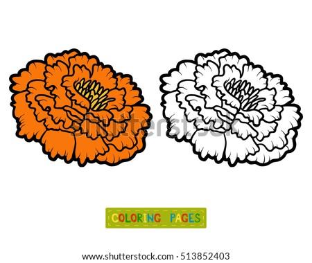 coloring book for children flower marigold