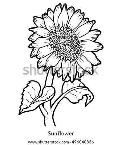 Coloring Book For Children Flower Sunflower