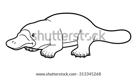 Platypus stock images royalty free images vectors for Duckbill platypus coloring page