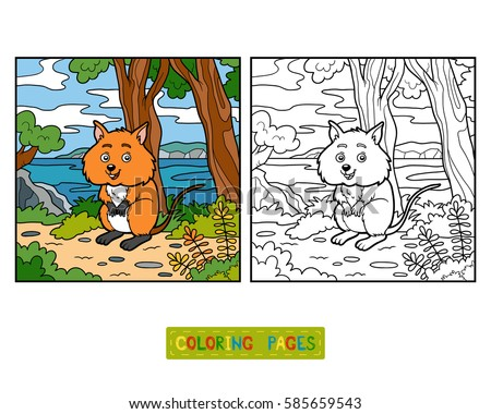 Quokka Stock Images Royalty Free Images Vectors Shutterstock