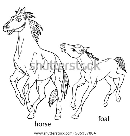 Alexa bliss wwe coloring pages sketch coloring page for Black and white horse coloring pages