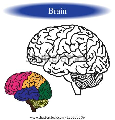 Human Brain Coloring Book Download Awesome Contemporary Socialmediagigus